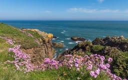 Flores del ahorro del mar en costa escocesa del NE Imagen de archivo