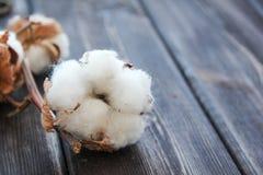 Flores del algodón en la tabla de madera Fotos de archivo libres de regalías