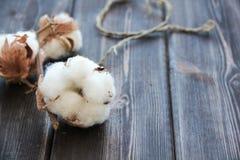 Flores del algodón en la tabla de madera Foto de archivo