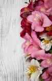 Flores del Alstroemeria en una tabla Imágenes de archivo libres de regalías