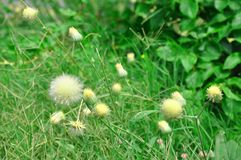 flores del Amarillo-cardo e hierba verde imagenes de archivo