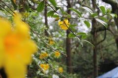 Flores del amarillo de Unfocoused en el bosque Foto de archivo