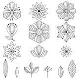 Flores del arte del garabato Elementos herbarios dibujados mano del diseño Foto de archivo libre de regalías