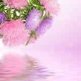 Flores del aster Imagenes de archivo