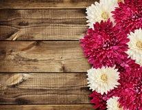Flores del aster en la madera Fotos de archivo