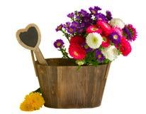 Flores del aster en pote de madera Imágenes de archivo libres de regalías