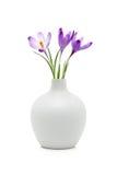 Flores del azafrán en el florero blanco Foto de archivo