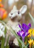 Flores del azafrán y escultura del conejito Foto de archivo libre de regalías