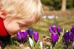 Flores del azafrán y pequeño niño Fotografía de archivo