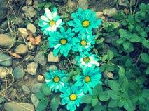 Flores del azul de la letra Y del alfabeto Fotografía de archivo libre de regalías