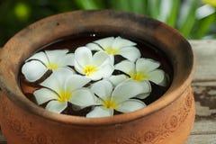 Flores del balneario Fotos de archivo