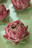 Flores del balneario Imagen de archivo libre de regalías