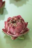 Flores del balneario Fotos de archivo libres de regalías