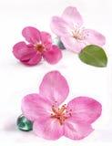 Flores del balneario Foto de archivo
