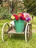 Flores del borde de la carretera Imagen de archivo libre de regalías