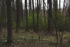 Flores del bosque Imagenes de archivo
