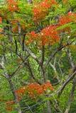 Flores del bosque Foto de archivo libre de regalías