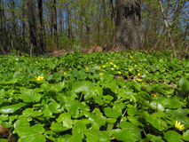 Flores del bosque de la primavera foto de archivo