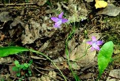 Flores del bosque del verano Foto de archivo libre de regalías