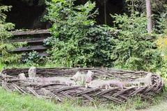 Flores del brezo cercadas por la cerca de mimbre Imágenes de archivo libres de regalías