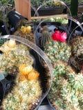 Flores del cactus Imagen de archivo