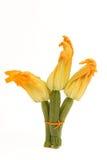Flores del calabacín Imagenes de archivo