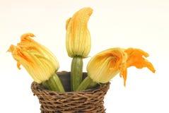 Flores del calabacín Foto de archivo libre de regalías