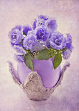 Flores del Campanula foto de archivo libre de regalías