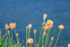 Flores del campo Foto de archivo
