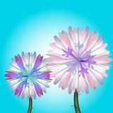 Flores del campo Fotografía de archivo libre de regalías