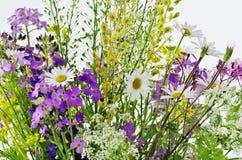 Flores del campo Foto de archivo libre de regalías