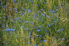 Flores del campo Fotos de archivo