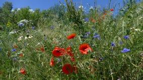 Flores del campo en el prado foto de archivo