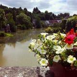 Flores del canal foto de archivo libre de regalías