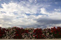 Flores del cielo Foto de archivo