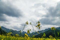 Flores del col Foto de archivo