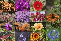 Flores del collage de Madeira de la isla Foto de archivo