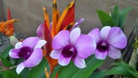 Flores del color del contraste Foto de archivo