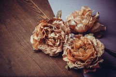 Flores del cordón imagen de archivo