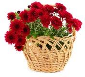 Flores del crisantemo en cesta imagenes de archivo