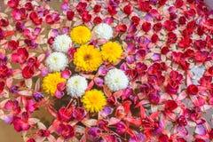 Flores del crisantemo en lavabo Imagen de archivo
