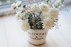 Flores del crisantemo en un pote decorativo Imagenes de archivo