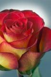 Flores del día de fiesta Fotografía de archivo libre de regalías
