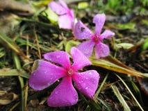 Flores del descenso Fotografía de archivo