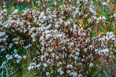 Flores del desierto en Crimea, Salem Imagenes de archivo