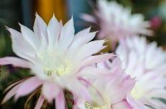 Flores del detalle en el natura Imágenes de archivo libres de regalías