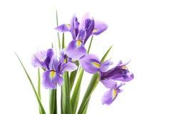 Flores del diafragma Foto de archivo