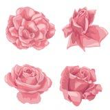 Flores del dibujo del vector Imagenes de archivo