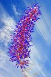 Flores del dichlamydea de Aechmea Fotos de archivo libres de regalías