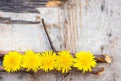 Flores del diente de león en un fondo de madera Foto de archivo libre de regalías